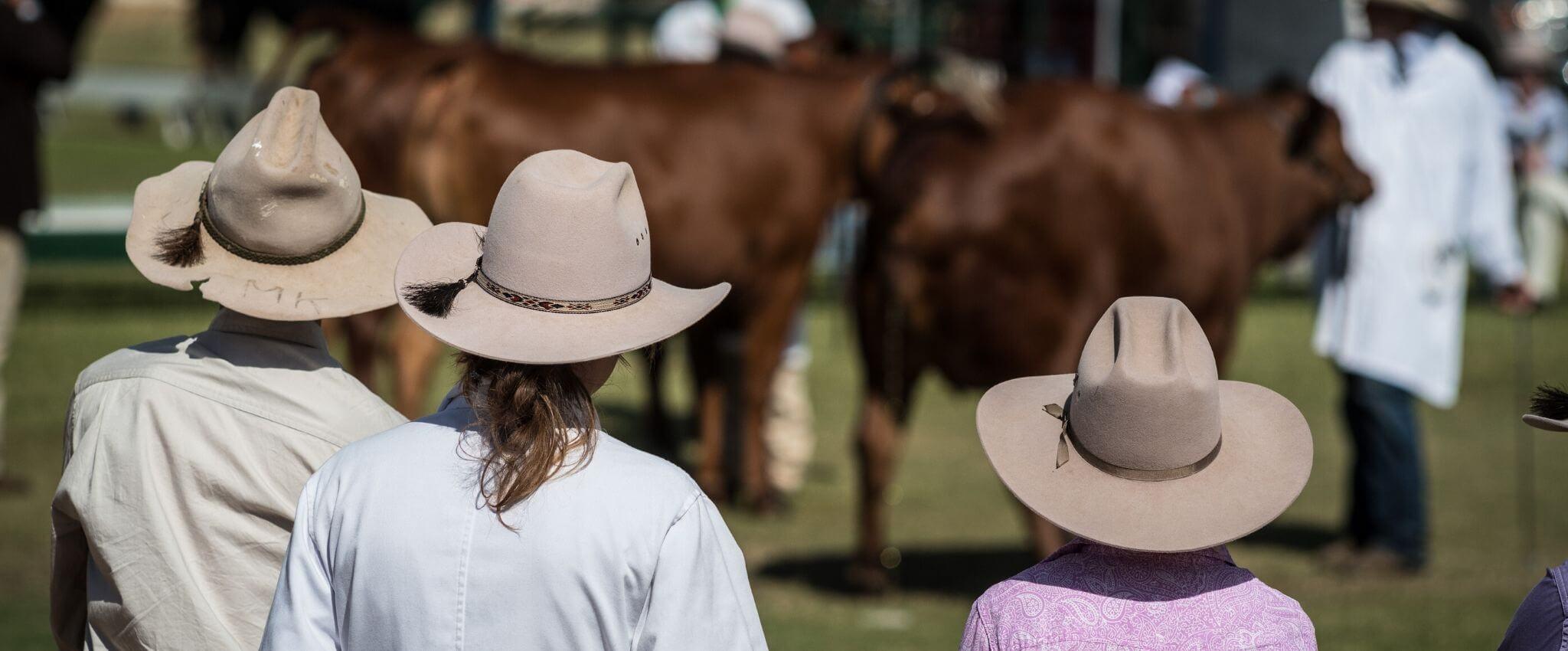 4-H Livestock show fair